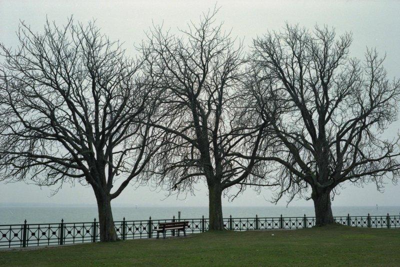 trees (Friedrichshafen)
