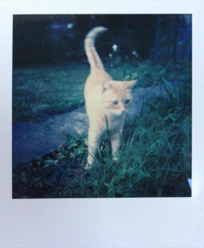PolaroidWeek Day 5